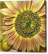 Beaming Sunflower Canvas Print
