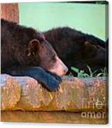 Bear Nap Canvas Print