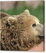 Bear Profile Canvas Print