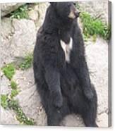 Bear Sitting On A Rock Canvas Print