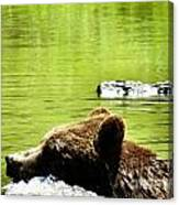 Bearly Swim Canvas Print