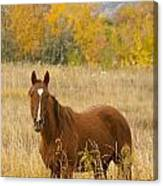 Beautiful Chestnut Horse Canvas Print
