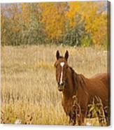 Beautiful Grazing Horse Canvas Print