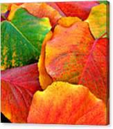 Beautiful Fall Leaves  Canvas Print