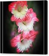 Beautiful Gladiolus Canvas Print