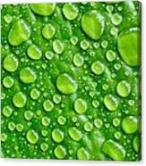 Beautiful Green Leaf With  Water Drops Canvas Print