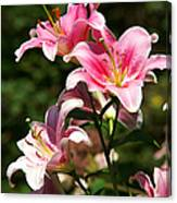 Beautiful Lilys Canvas Print