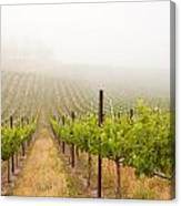 Beautiful Lush Grape Vineyard Canvas Print