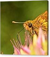 Beautiful Moth Canvas Print