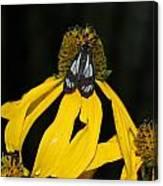 Beautiful Moth Ser2 Canvas Print