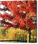 Beautiful Red Maple Tree  Canvas Print