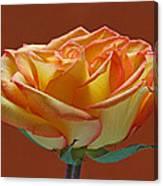 Beautiful Rosa Canvas Print