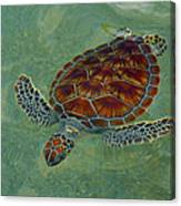 Beautiful Sea Turtle Canvas Print