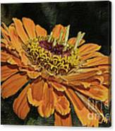 Beauty In Orange Petals Canvas Print