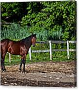 Beauty Of A Horse Canvas Print