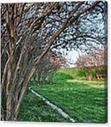 Beauty Without Blossoms Canvas Print