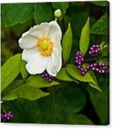 Beautyberry And Anemone 2 Canvas Print