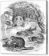 Beavers Canvas Print