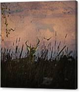 Bedding Down For Evening Canvas Print