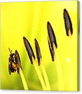 Bee A Little Different Canvas Print