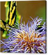 Bee And The Butterfly Canvas Print