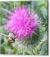 Bee And Thisle Canvas Print
