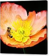Bee Asleep In A Flower Canvas Print
