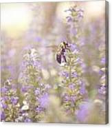 Bee Beeutiful Canvas Print