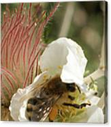 Bee Break Canvas Print