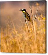 Bee Eater With Insect Canvas Print