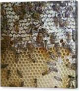 Bee Hive Canvas Print