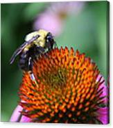 Bee-ing Happy Canvas Print