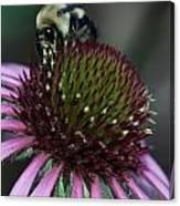 Bee Life 1 Canvas Print
