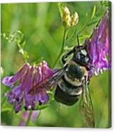 Bee On A Pink Flower Canvas Print