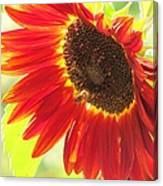 Bee On A Sunflower Canvas Print