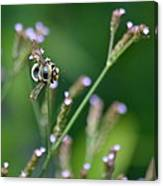 Bee On End Canvas Print