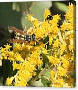 Bee On Goldenrod Canvas Print