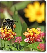 Bee On Lantana Flower Canvas Print