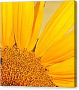 Bee On Sunflower Canvas Print