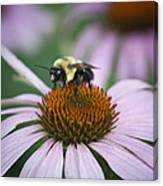 Bee Resting Squared Canvas Print
