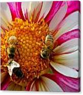 Bee Time Canvas Print