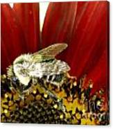 Bee Tip Toes Canvas Print