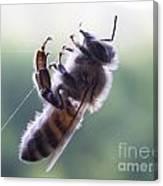 Bee Web Canvas Print