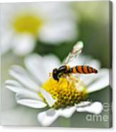 Bee With Rainbow Wings Canvas Print