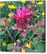 Beebalm Flower Canvas Print