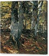Beechwoods At Polling Bavaria Canvas Print