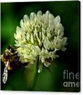 Beeflower2 Canvas Print