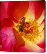 Beetobee Canvas Print