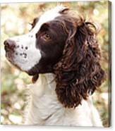 Before The Hunt - English Springer Spaniel Canvas Print
