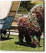 Begonia Horse Canvas Print